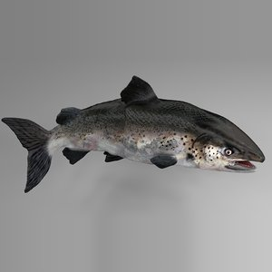 3D model salmon rigged l745 animate