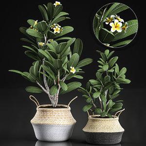 decorative interior baskets plumeria model