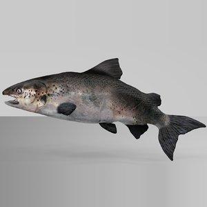 3D salmon rigged l746 model