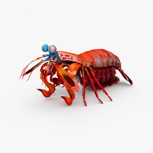 mantis shrimp 3D model