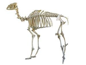 3D camel skeleton hd