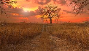 3D meadow sunset sun