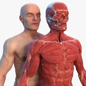 male skeleton muscular skin human 3D model