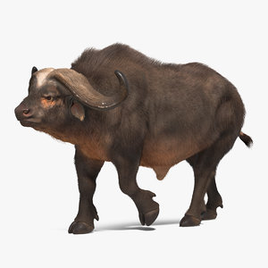 3D african buffalo walking pose