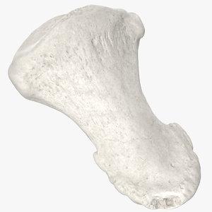 3D model distal phalanx bone big