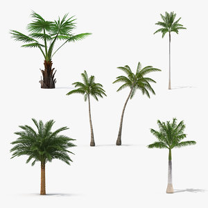 palms 2 model