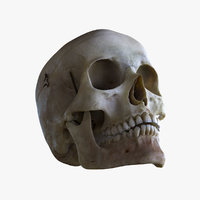 Human Skull(1)