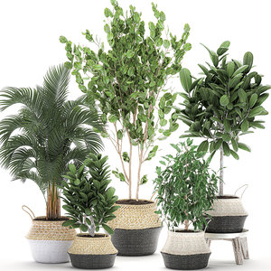 decorative interior baskets trees 3D
