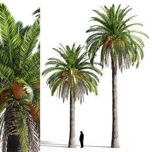 date palm model