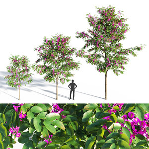 purple robe locust 3D model