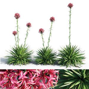 3D gymea lily doryanthe model