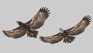 3D rigged eagles animation model
