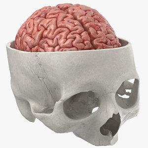 3D human skull cranial 02 model