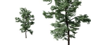 black locust tree 3D model