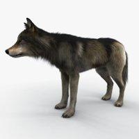 Wolf fur variation