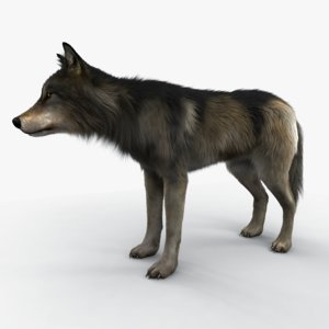 3D wolf fur variations