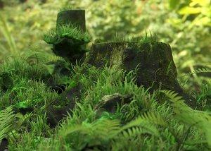 3D model environment grass forest