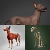 Mexican Hairless Dog Full Anatomy Model