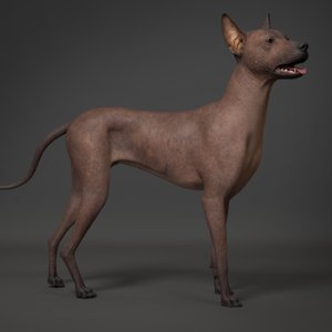 mexican hairless dog animal 3D