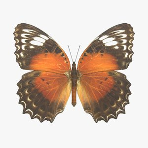 3D model red lacewing butterfly