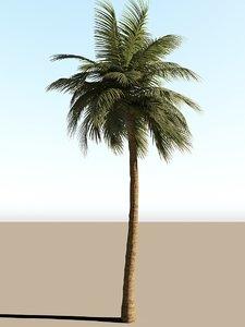 coconut tree animation 3D model