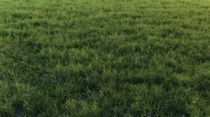 grass landscape 3D model