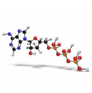 3D adenosine triphosphate molecule c10h16n5o13p3