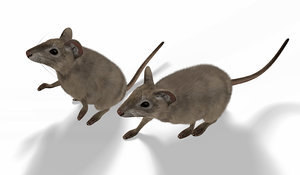 rigged mouse animation 3D model