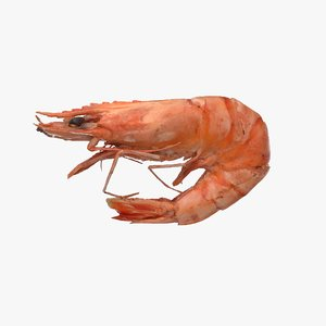 3D cooked tiger prawn model