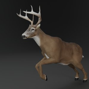 3D rigged low-poly deer animations model