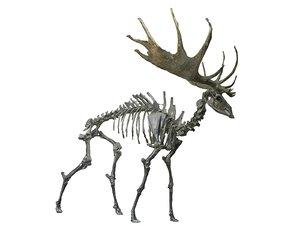 wisent skeleton hd 3D model