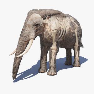 elephant skin skeleton 3D
