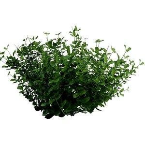 plant nature bush 3D model