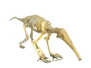 3D model ant-eater skeleton