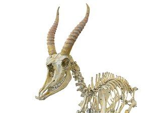 3D goat skeleton hd