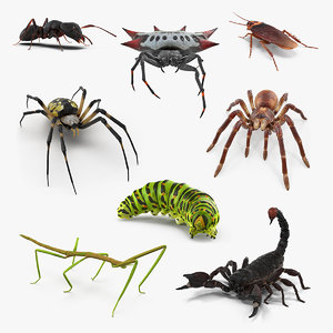 creeping insects 2 3D model