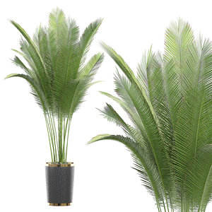 3D potted plant 70