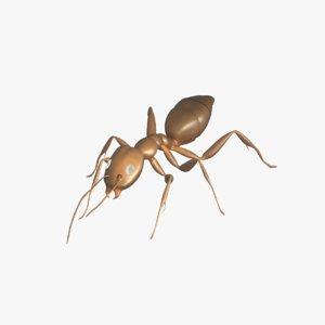 3D model sugar ant