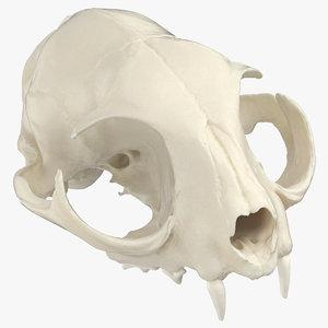 domestic cat skull 01 3D model