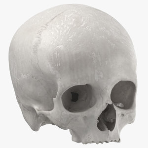 human skull cranial 01 3D