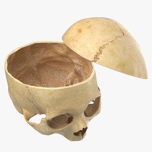 human skull cranial 02 model
