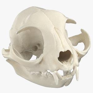 domestic cat skull jaw 3D model