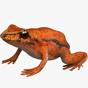 frog tomato model