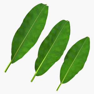 leaves banana tree 3D