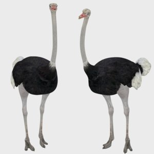 ready rigged ostrich 3D model