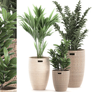 decorative plants baskets model