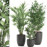 Decorative plants in a white flowerpot 567