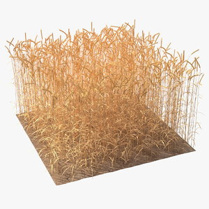 section wheat field 3D model