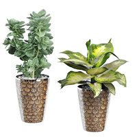 Potted Plants Collection 75