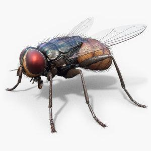 3D housefly realistic wings model